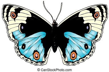 beauty butterfly isolated