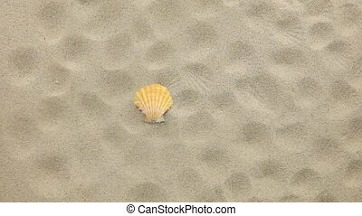 Yellow seashell and her prints blown away by wind. Beach and...