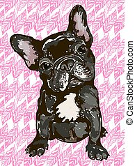 French bulldog - Illustration of the dog breed French...