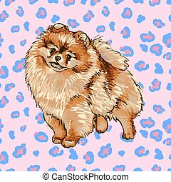 Pomeranian - Illustration of the dog breed Pomeranian