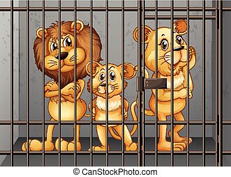Lions being locked in the cage
