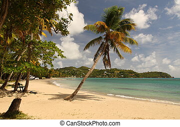 Deserted sandy beach with palm trees in the Caribbean