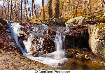 Rose River in Shenandoah National Park forest VA