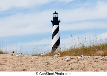 Shore birds and Cape Hatteras Lighthouse NC US -...