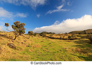 Azores landscape – grass, trees and blue sky