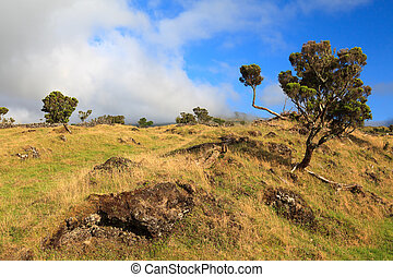 Landscape of trees and rocky field in Azores