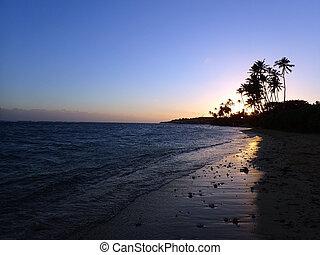 Sunset through Coconut Trees line Kahala Beach