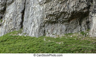 Grass and rock background