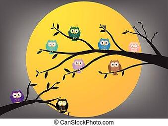 Owls on tree in night