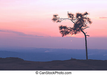 Pine tree with sweet sky during sunset - Silhouetted pine...