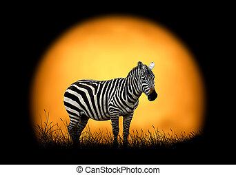 Zebra on the background of sunset