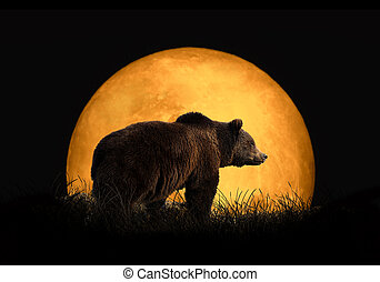 Bear on the background of red moon. Large moon on a dark...