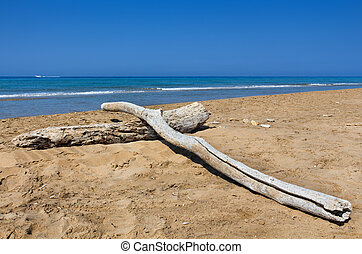 Decayed logs on deserted beach with deep blue sea