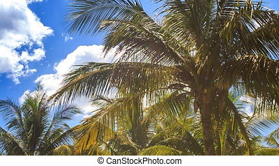 Large Palms in City Park against Blue Sky Azure Sea -...