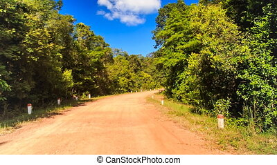 Camera Moves along Ground Road in Thick Tropical Forest
