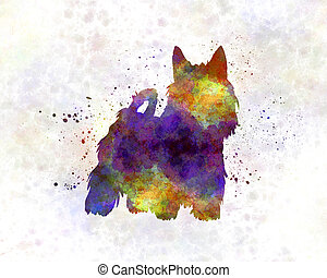 Australian Silky Terrier in watercolor
