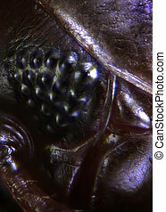 Micrographs of insects