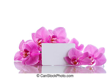 Beautiful purple phalaenopsis flowers on a white background