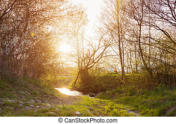Rural landscape with bourn, blooming trees, sunny spring...
