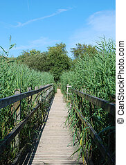 wooden walkway - A wooden walkway across a wetlands nature...