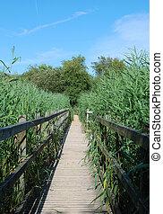 wooden walkway - A wooden walkway across a wetlands nature...