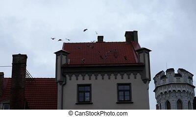 Flying birds from house roof, riga latvia