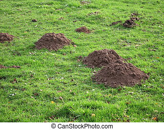 molehill in a field