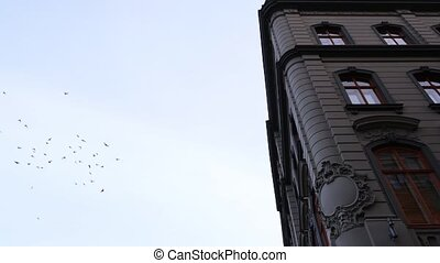 A flock of birds take flight in the morning over the urban sprawl rooftops of Riga, Latvia