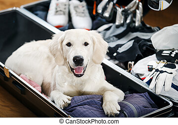 Golfer's best friend - Dog is helping his owner golfer to...