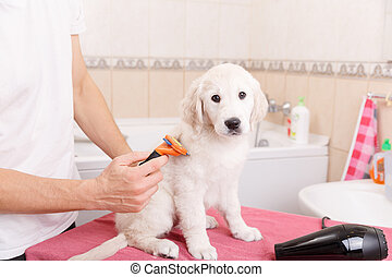 man grooming of his dog at home - Owner is combing out the...