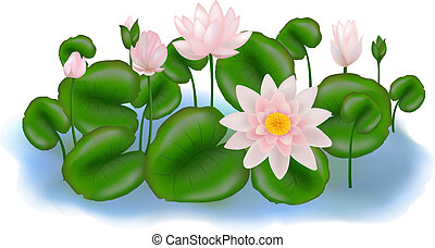Group Lotuses with leaves - Group of Pink and white Lotus...