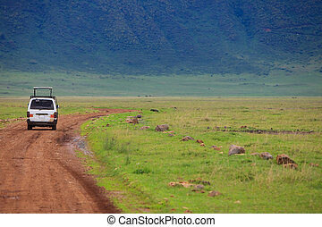 Game drive. Safari car on game drive in, Ngorongoro crater...