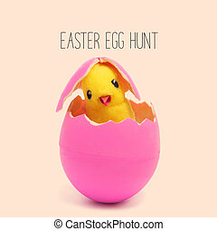 text easter egg hunt and a teddy chick emerging from a pink...