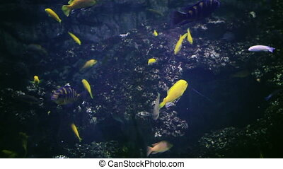 Aquarium, Fish Tank, Coral Reef, Animals, Nature - Many...