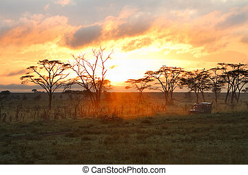 Morning safari drive Beautiful sunrise in Serengeti national...