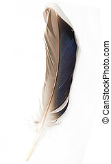 feather on white background