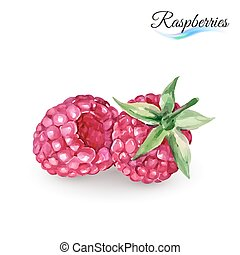 Raspberry - Hand-Drawn Watercolor Painting Raspberry on...