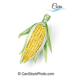 Corn Cob with Leaf Made of Watercolor Painting on White