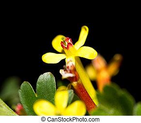 beautiful little yellow flowers in nature. macro