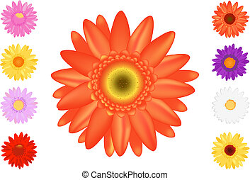 Colourful Gerbers Set - Vector Spring Daisies, Isolated On...