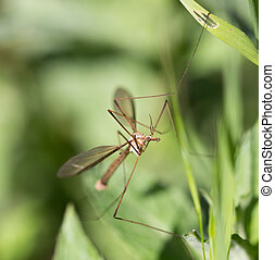 mosquito in the grass outdoors. macro