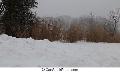 snow storm jonas snowstorm - highway people road wilderness...