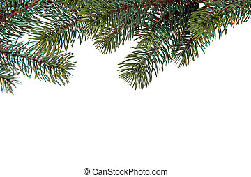 Fir branches of a christmas decoration