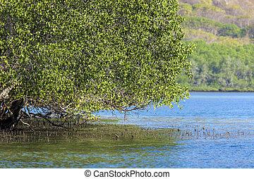 Mangrove treesSumbawa islandIndonesia