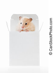 Little hamster sitting inside a box - A white hamster in a...