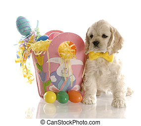 easter puppy - american cocker spaniel puppy sitting beside...