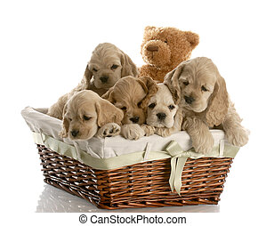 litter of puppies - wicker basket filled with a litter of...
