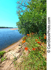 Wisconsin River Landscape Portage - Orange daylilies grow...