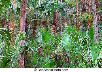 Florida Palmetto Landscape - Palmetto fronds blanket the...