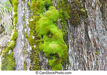 Various green mosses and lichens on rock in mountains